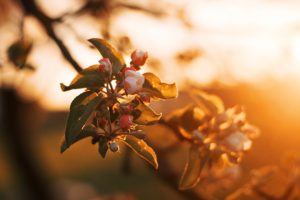 closeup photography of flower at golden hour