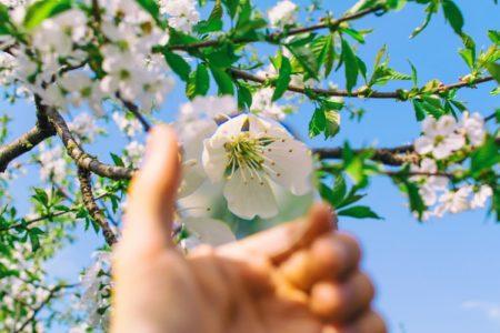 spring three