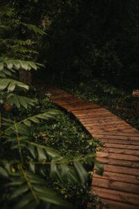 brown wooden pathway between green plants